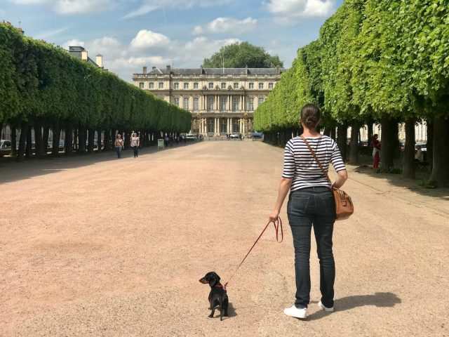 can you take your dog to france from uk