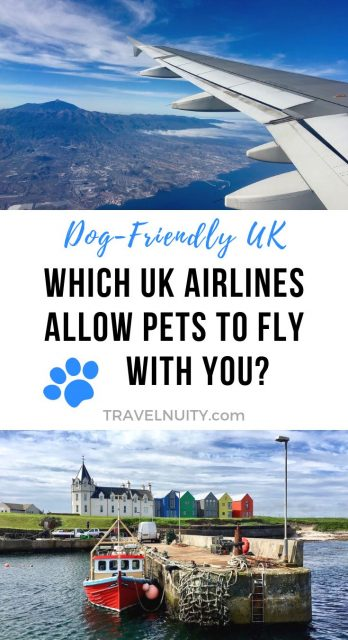 Flying with a dog UK