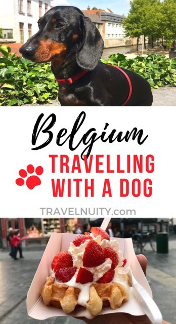 Travelling with a dog in Belgium