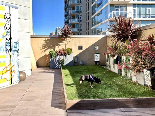 Dog-friendly hotels San Diego