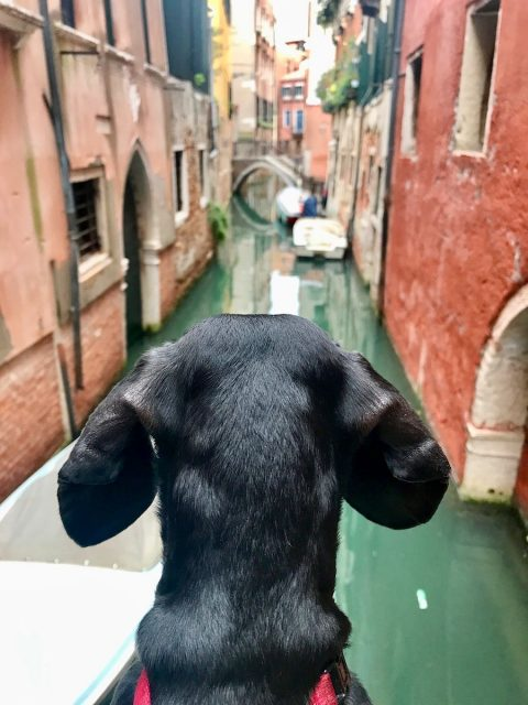 Visiting Venice with a dog