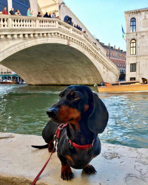 Dog in Venice