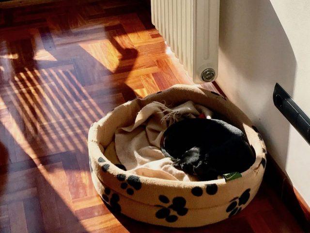 Dog-friendly Airbnb