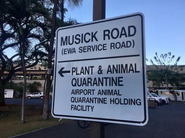 Hawaii pet quarantine