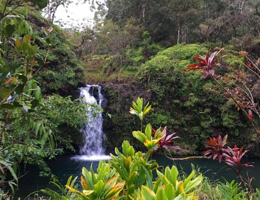 Travel to Hawaii with Dog