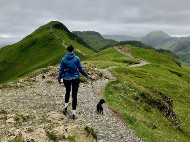 Dog-friendly things to do in England