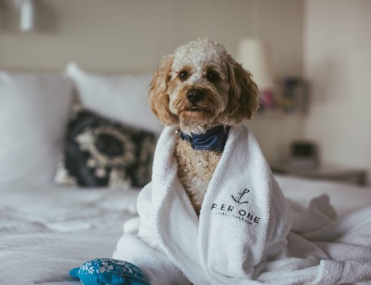 Dog-friendly luxury hotels Australia