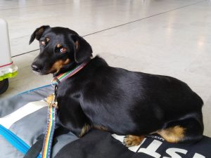 Travel with dog from Thailand to Europe