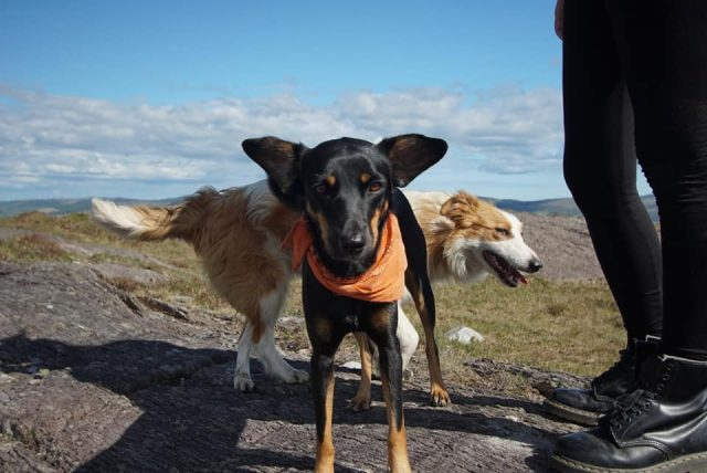 Travel with dog from Thailand to Ireland