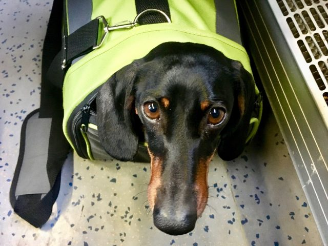 Dogs on trains in Europe