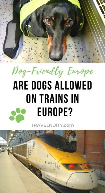Dogs on Trains in Europe pin