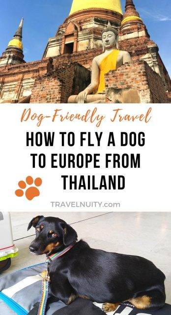 How to Fly a Dog to Europe from Thailand pin