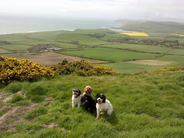 Dog-friendly Dorset