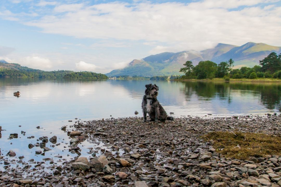 Dog-friendly national parks in the UK: The Lake District