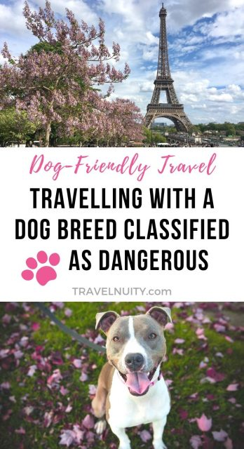 Dangerous dog breeds pin