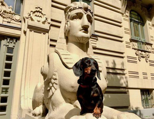 Dog-friendly Riga