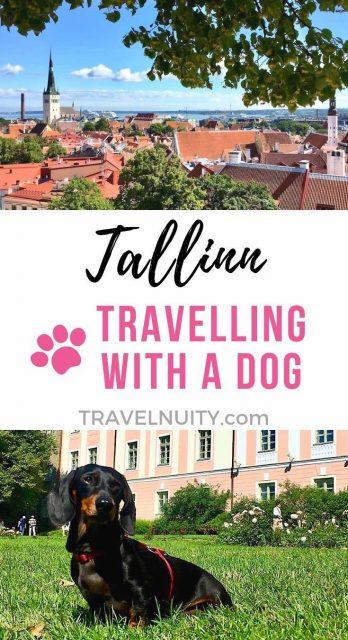 Tallinn dog-friendly travel
