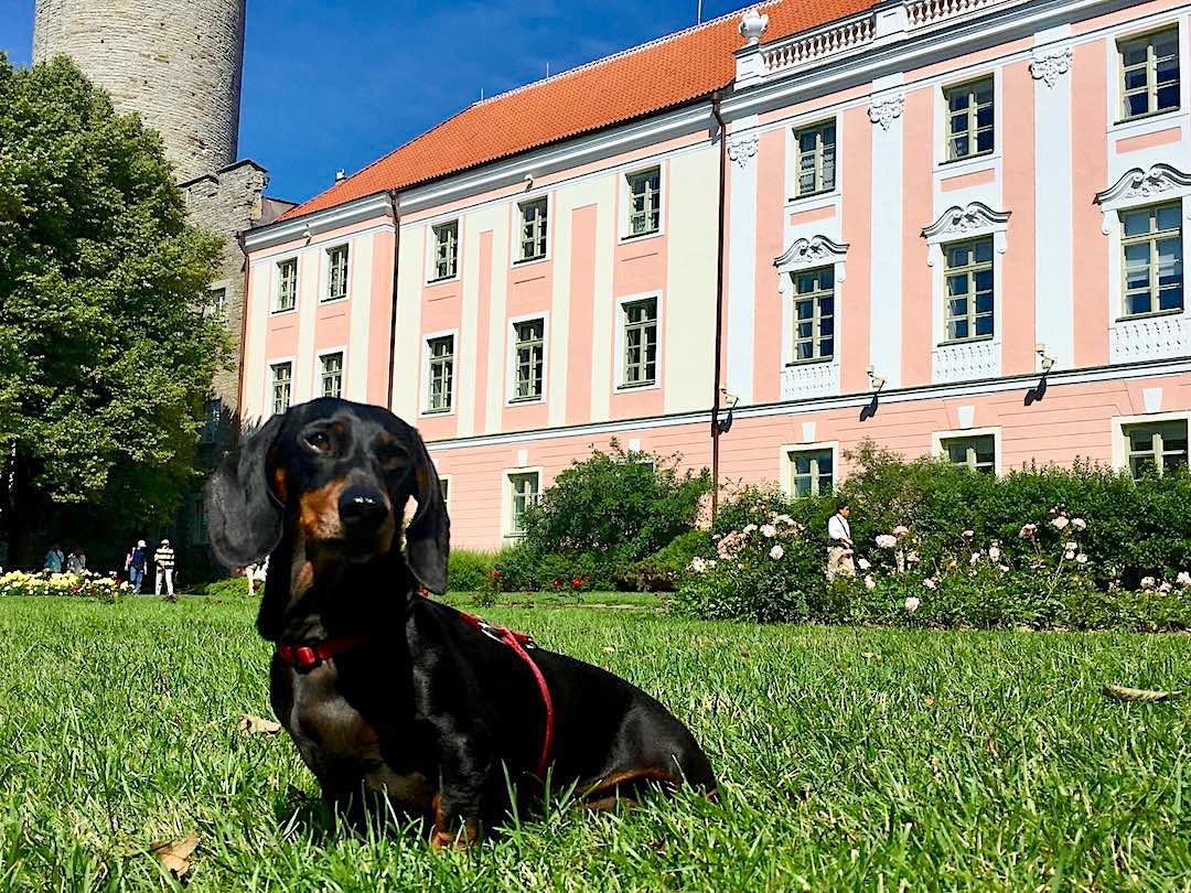 Dog-friendly Tallinn