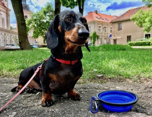 Dog-friendly Lithuania