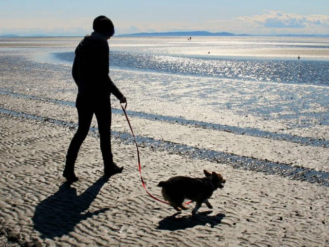 Dog-friendly day trips from London