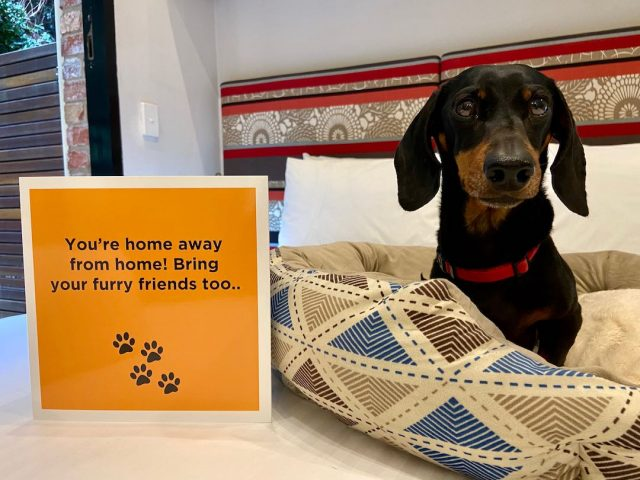 How to Book Pet-Friendly Accommodation on Hotels.com - Travelnuity