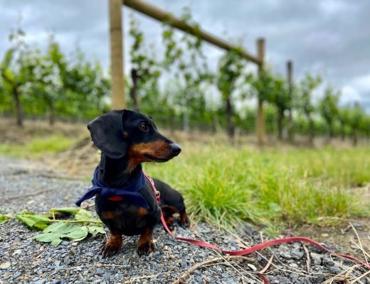 Dog-friendly Yarra Valley
