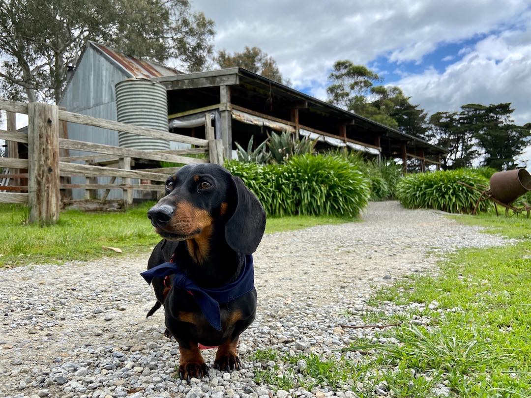 Dog-Friendly Victoria