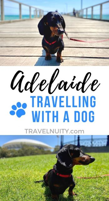 Dog-Friendly Adelaide