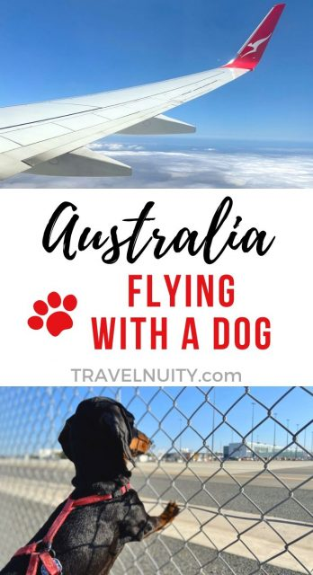 Flying with a Dog in Australia