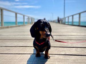 Dog-Friendly Adelaide