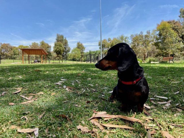 Dog park in Adelaide
