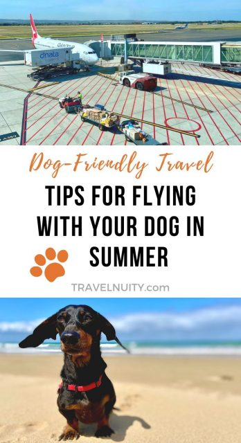 Flying with a dog in Summer