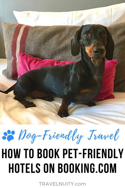 How to book pet-friendly hotels on Booking.com