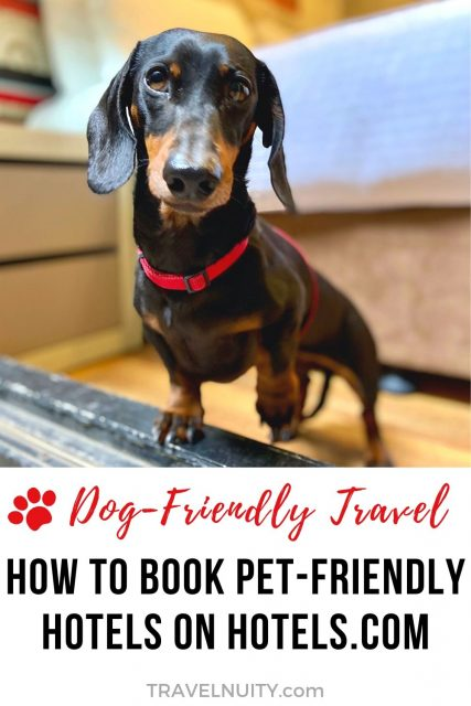 How to book pet-friendly hotels on Hotels.com
