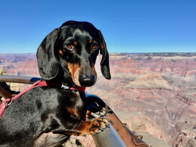 Dog-Friendly Grand Canyon