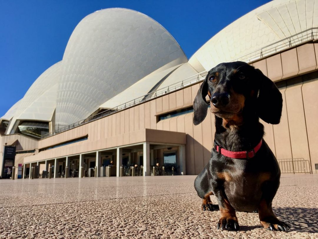 Dog-Friendly Hotels Sydney