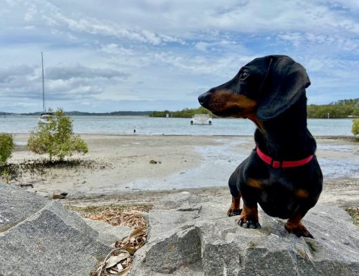 Dog-Friendly Port Stephens