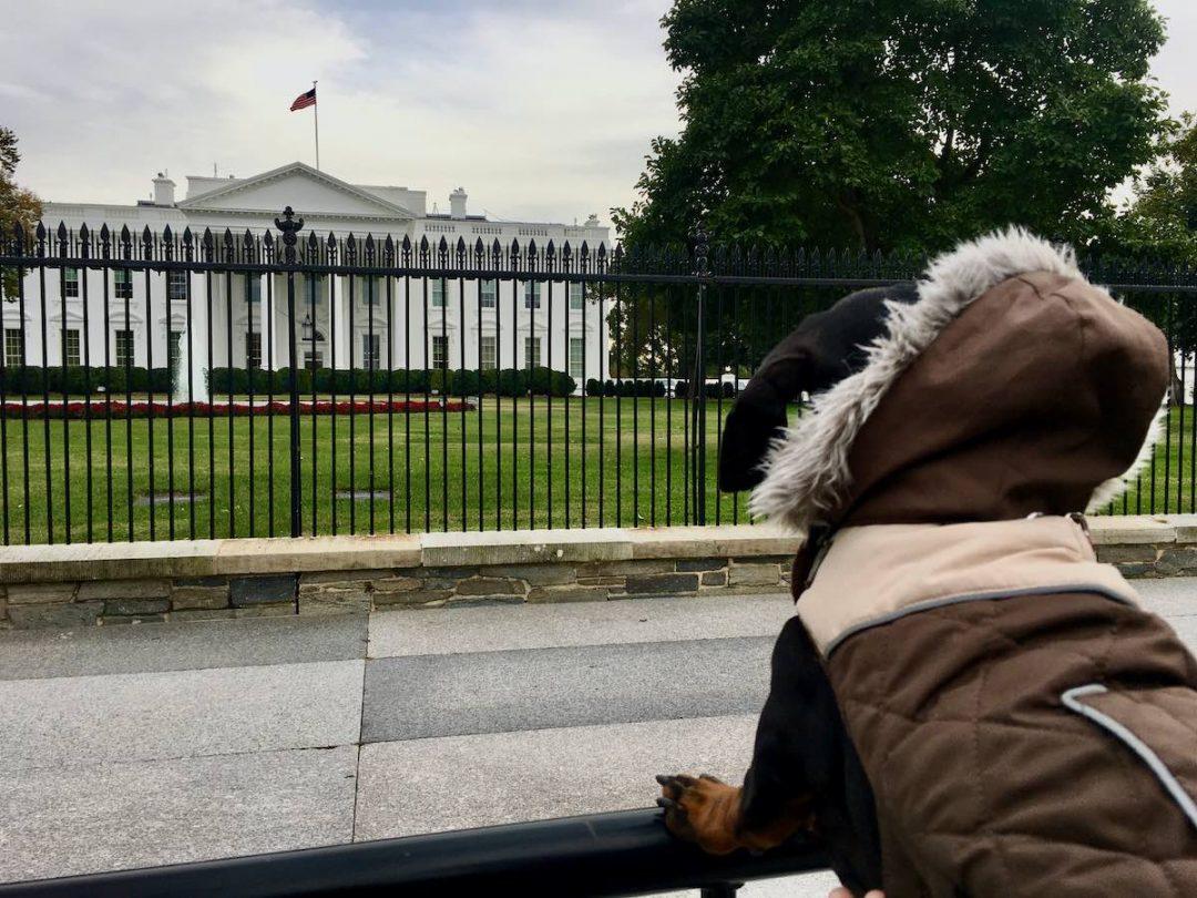 Dog-Friendly Washington DC