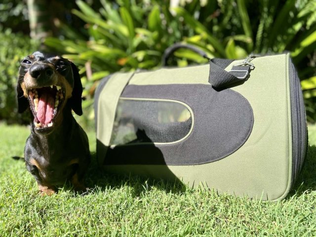 Best Dog Carrier Bags for Flying with your dog in the cabin