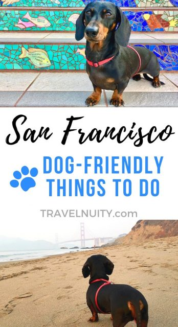 San Francisco Dog-Friendly Things To Do