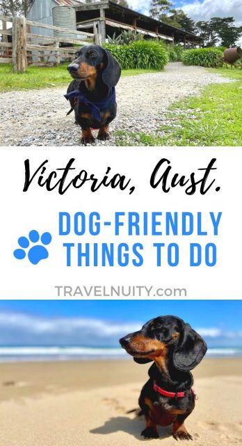 Victoria Dog-Friendly Things To Do