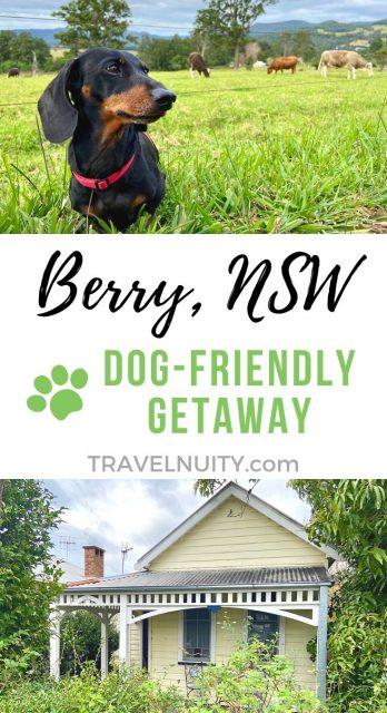 Berry & Kangaroo Valley Dog-Friendly Travel