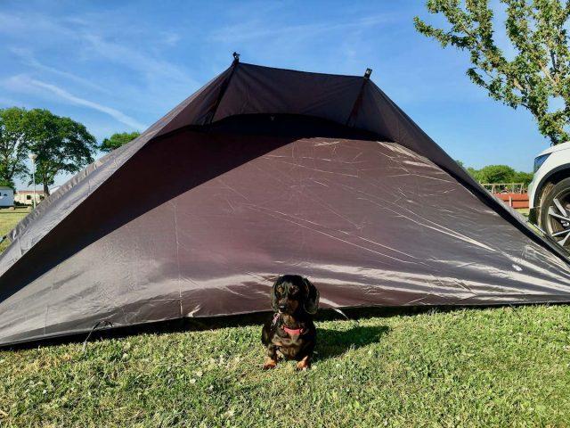 Dog friendly camping Australia