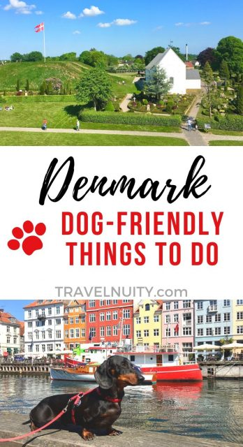 Dog-friendly things to do in Denmark