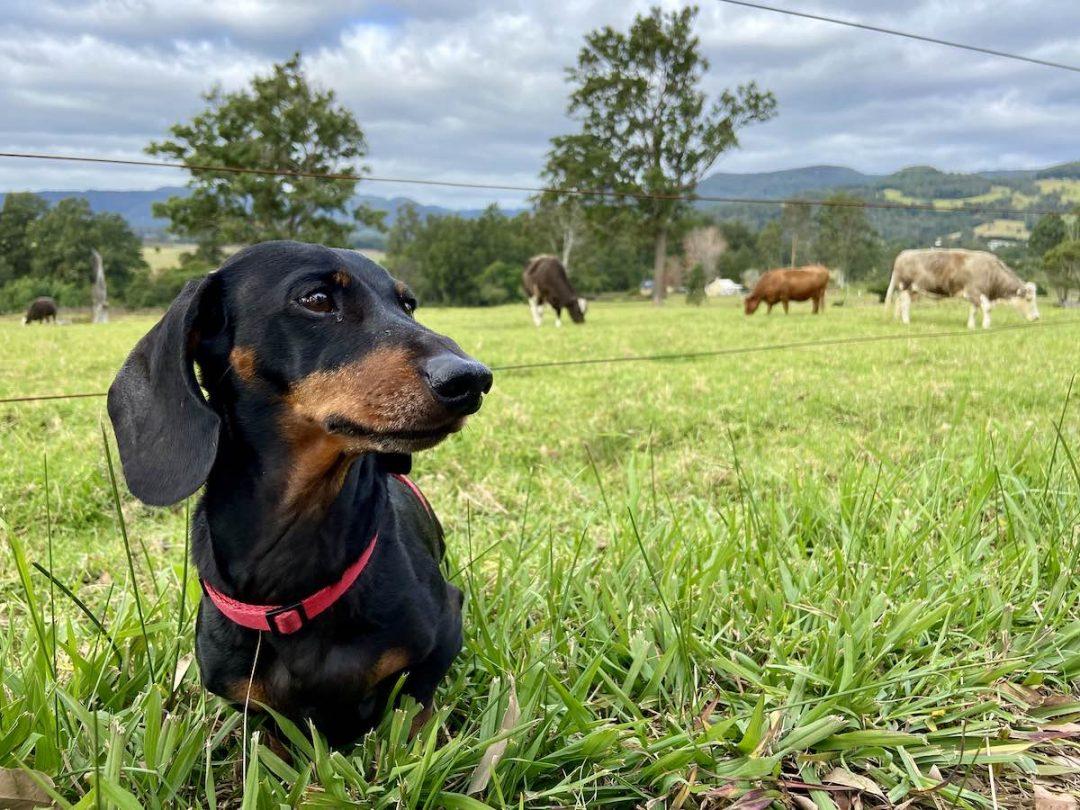 Dog-Friendly Berry Kangaroo Valley