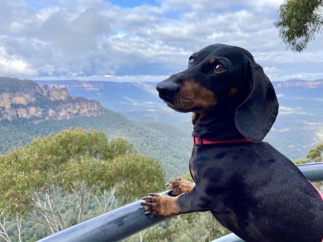 Dog-Friendly Blue Mountains