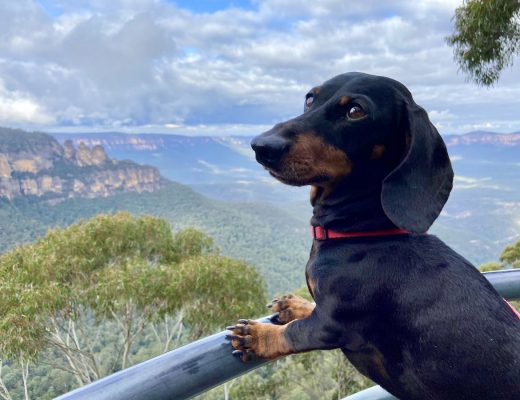 Dog-Friendly Blue Mountains