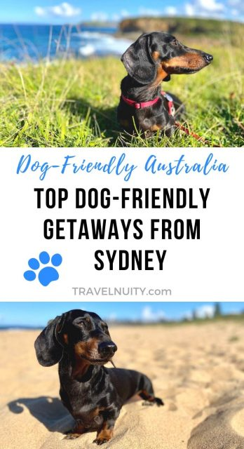 Dog-Friendly Getaways from Sydney