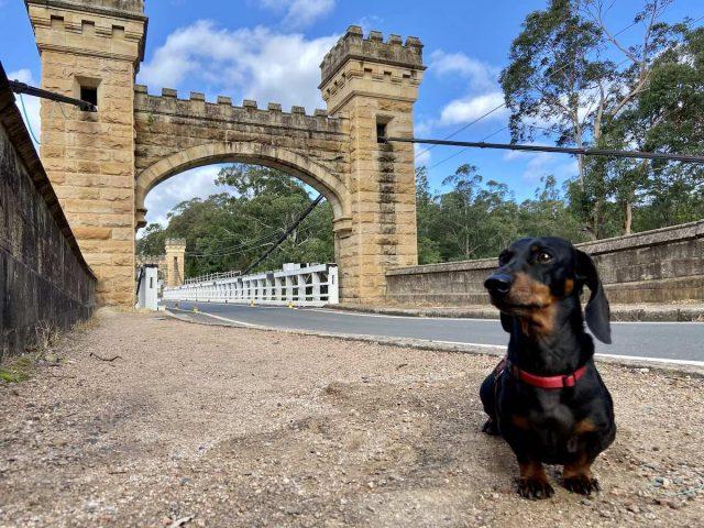 Dog-Friendly Kangaroo Valley