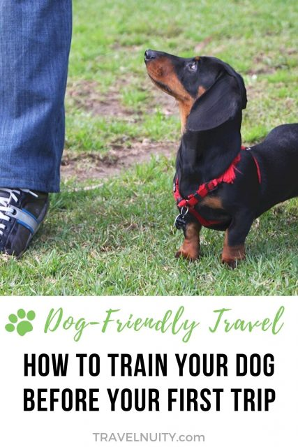 How to Train Your Dog Before Travel